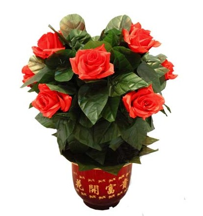 遥控慢开玫瑰花(10朵)--中国魔术道具批发网