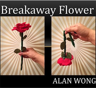 魔术师手拿一朵玫瑰,交给观众,观众刚拿到手里,玫瑰花瞬间枯萎.